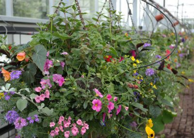 Variety of Hanging Baskets to Choose From