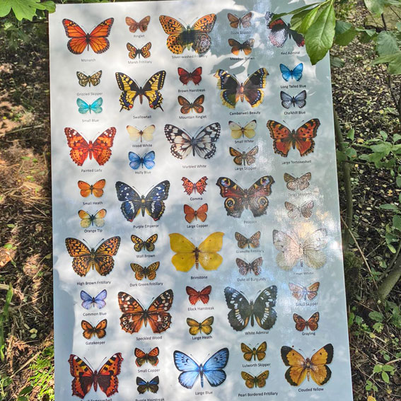butterflies on a poster