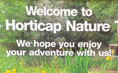 Why a Nature Trail Is an Amazing Place for Adults and Children to Learn About the Environment